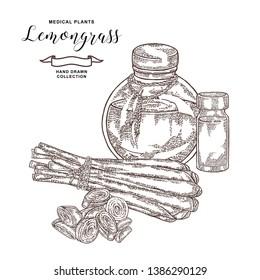 Lemongrass plant isolated on white background. Hand drawn set of lemongrass leaves, slices and glass bottles. Vector illustration vintage.