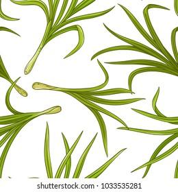 lemongrass  plant vector pattern
