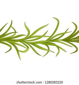 lemongrass  plant vector pattern on white background