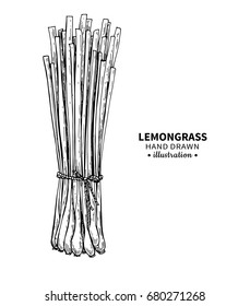 Lemongrass vector drawing. Isolated vintage  illustration of leaves. Organic essential oil engraved style sketch. Beauty and spa, cosmetic and tea ingredient. Great for label, poster, packaging design