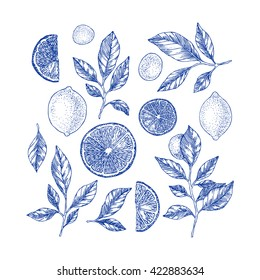 Lemons background. Linear graphic. Engraved citrus composition. Vector illustration