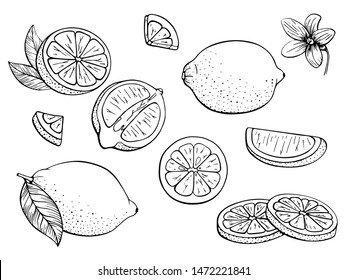 Lemons. Set citrus. Fruits. Whole lemon, slice, cut pieces, flower, plant leaves. Vector hand drawn. Black and white. Stylized linear illustration. Isolated on white background. Coloring book, page.