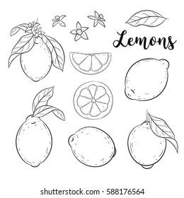 Lemons set. Vector sketch, doodle