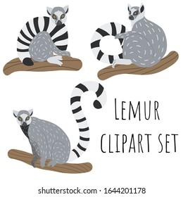 Lemur hand drawn vector illustrations. Three realistic cute lemurs in different poses sitting on branches. Endangered animals clipart set.