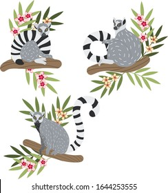 Lemur hand drawn vector illustrations. Three realistic cute lemurs in different poses sitting on branches with tropical jungle flowers. Endangered animals clipart set. Animalistic floral collection