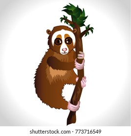 lemur loris. Exotic animal. Vector illustration. lori on the tree
