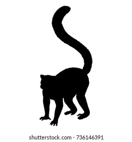 Lemur silhouette. Hand drawn image. Black white icon. Vector illustration. Logo desing
