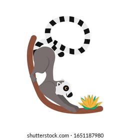 Lemur vector illustration isolated on a white background, a lemur sitting on a tree and looking at a flower. Exotic animal. Primate: Rod Lori. Cute animal with a fluffy striped tail. For prints