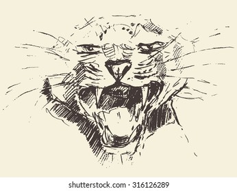 Leopard head, attacking pose, engraving style, vintage illustration, hand drawn, sketch
