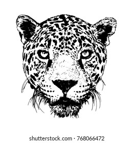 Leopard head. Black and white vector sketch