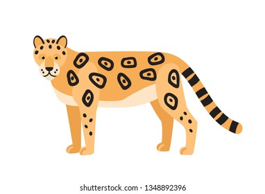 Leopard isolated on white background. Gorgeous wild exotic carnivorous animal. Graceful large wild cat or adorable felid with spotted coat. Colorful vector illustration in flat cartoon style.