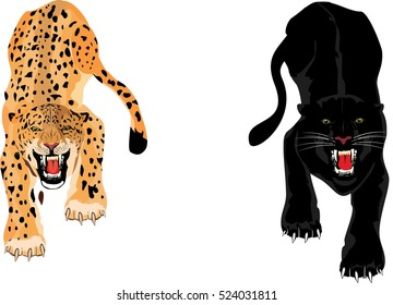 Leopard and Panther isolated on white background, vector illustration.