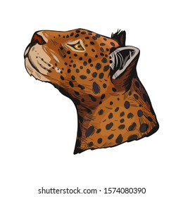 Leopard portrait of exotic animal isolated vector illustration sketch. Profile of panther looking aside. Felidae family member, mammal with furry coat with dots. Carnivore panthera pardus wildlife