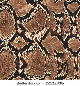 leopard snake and leopard skin pattern