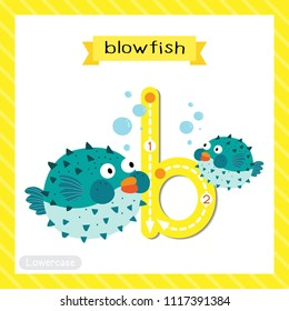 Letter B lowercase cute children colorful zoo and animals ABC alphabet tracing flashcard of Blue Blowfish for kids learning English vocabulary and handwriting vector illustration.