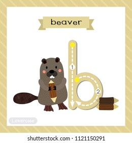 Letter B lowercase cute children colorful zoo and animals ABC alphabet tracing flashcard of standing Beaver holding a log for kids learning English vocabulary and handwriting vector illustration.