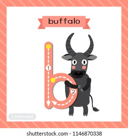 Letter B lowercase cute children colorful zoo and animals ABC alphabet tracing flashcard of Buffalo standing on two legs for kids learning English vocabulary and handwriting vector illustration.