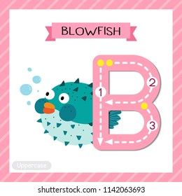 Letter B uppercase cute children colorful zoo and animals ABC alphabet tracing flashcard of Blue Blowfish for kids learning English vocabulary and handwriting vector illustration.