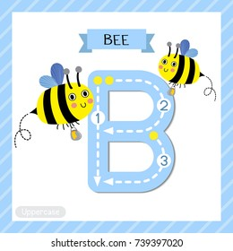 Letter B uppercase cute children colorful zoo and animals ABC alphabet tracing flashcard of Happy Bee flying with jar of honey for kids learning English vocabulary and handwriting vector illustration.