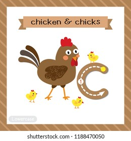 Letter C lowercase cute children colorful zoo and animals ABC alphabet tracing flashcard of Chicken and Chicks for kids learning English vocabulary and handwriting vector illustration.