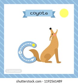 Letter C lowercase cute children colorful zoo and animals ABC alphabet tracing flashcard of Howling Coyote for kids learning English vocabulary and handwriting vector illustration.