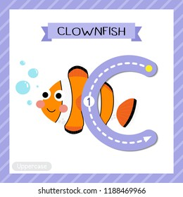 Letter C uppercase cute children colorful zoo and animals ABC alphabet tracing flashcard of Clownfish for kids learning English vocabulary and handwriting vector illustration.