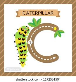 Letter C uppercase cute children colorful zoo and animals ABC alphabet tracing flashcard of Caterpillar crawling on the branch for kids learning English vocabulary and handwriting vector illustration.