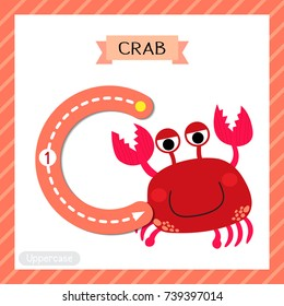 Letter C uppercase cute children colorful zoo and animals ABC alphabet tracing flashcard of red Crab for kids learning English vocabulary and handwriting vector illustration.
