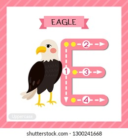 Letter E uppercase cute children colorful zoo and animals ABC alphabet tracing flashcard of Standing Eagle for kids learning English vocabulary and handwriting vector illustration.