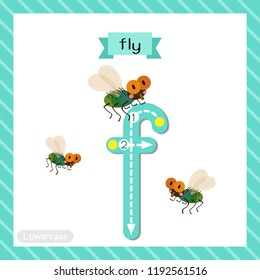 Letter F lowercase cute children colorful zoo and animals ABC alphabet tracing flashcard of Fly for kids learning English vocabulary and handwriting vector illustration.