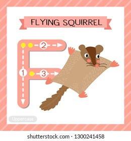Letter F uppercase cute children colorful zoo and animals ABC alphabet tracing flashcard of Flying Squirrel for kids learning English vocabulary and handwriting vector illustration.