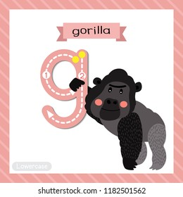 Letter G lowercase cute children colorful zoo and animals ABC alphabet tracing flashcard of Gorilla for kids learning English vocabulary and handwriting vector illustration.