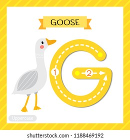 Letter G uppercase cute children colorful zoo and animals ABC alphabet tracing flashcard of Goose for kids learning English vocabulary and handwriting vector illustration.