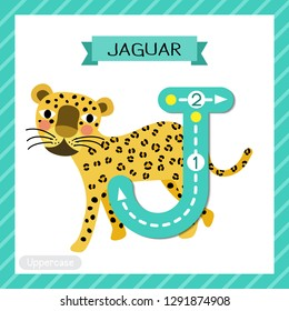 Letter J uppercase cute children colorful zoo and animals ABC alphabet tracing flashcard of Walking Jaguar for kids learning English vocabulary and handwriting vector illustration.