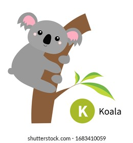 Letter K. Koala. Zoo animal alphabet. English abc with cute cartoon kawaii funny baby animals. Education cards for kids. Isolated. White background. Flat design. Vector illustration