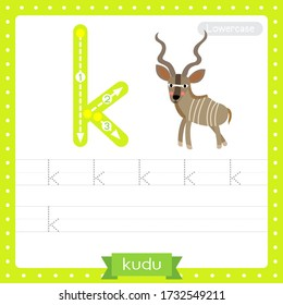 Letter K lowercase cute children colorful zoo and animals ABC alphabet tracing practice worksheet of Kudu for kids learning English vocabulary and handwriting vector illustration.
