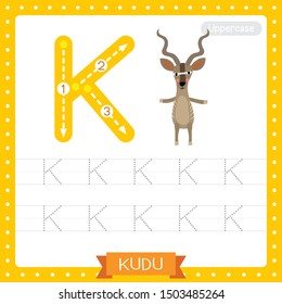 Letter K uppercase cute children colorful zoo and animals ABC alphabet tracing practice worksheet of Kudu standing on two legs for kids learning English vocabulary and handwriting vector illustration.
