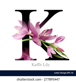 Letter K vector alphabet with kaffir lily flower. ABC concept type as logo. Typography design