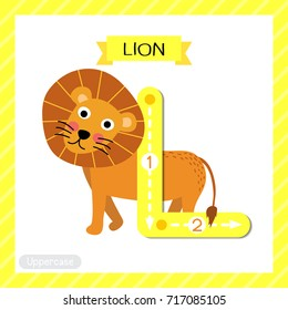 Letter L uppercase cute children colorful zoo and animals ABC alphabet tracing flashcard of Lion for kids learning English vocabulary and handwriting vector illustration.