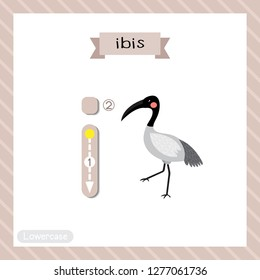 Letter I lowercase cute children colorful zoo and animals ABC alphabet tracing flashcard of Ibis bird for kids learning English vocabulary and handwriting vector illustration.