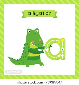 Letter A lowercase cute children colorful zoo and animals ABC alphabet tracing flashcard of Alligator for kids learning English vocabulary and handwriting vector illustration.