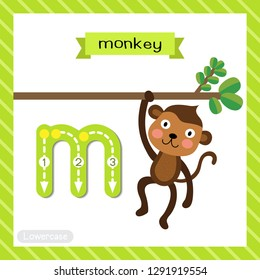 Letter M lowercase cute children colorful zoo and animals ABC alphabet tracing flashcard of Cute Monkey for kids learning English vocabulary and handwriting vector illustration.