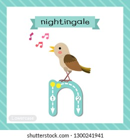 Letter N lowercase cute children colorful zoo and animals ABC alphabet tracing flashcard of Singing Nightingale bird for kids learning English vocabulary and handwriting vector illustration.