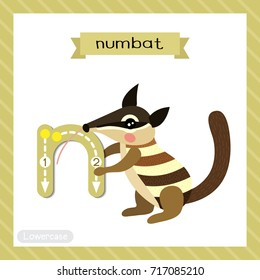 Letter N lowercase cute children colorful zoo and animals ABC alphabet tracing flashcard of Numbat for kids learning English vocabulary and handwriting vector illustration.