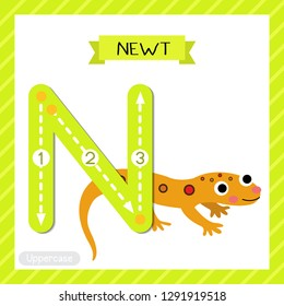 Letter N uppercase cute children colorful zoo and animals ABC alphabet tracing flashcard of Eastern Red-spotted Newt for kids learning English vocabulary and handwriting vector illustration.
