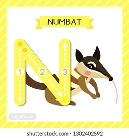 Letter N uppercase cute children colorful zoo and animals ABC alphabet tracing flashcard of Numbat for kids learning English vocabulary and handwriting vector illustration.