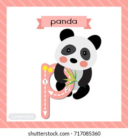 Letter P lowercase cute children colorful zoo and animals ABC alphabet tracing flashcard of Sitting Chinese Panda bear for kids learning English vocabulary and handwriting vector illustration.