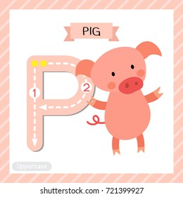 Letter P uppercase cute children colorful zoo and animals ABC alphabet tracing flashcard of Standing Pig for kids learning English vocabulary and handwriting vector illustration.