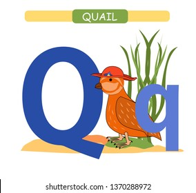 image about Letter Q Printable called Q for Quail Pics, Inventory Photographs Vectors Shutterstock