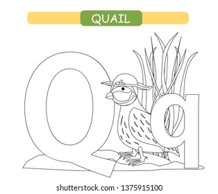 graphic relating to Letter Q Printable identified as Q for Quail Visuals, Inventory Illustrations or photos Vectors Shutterstock